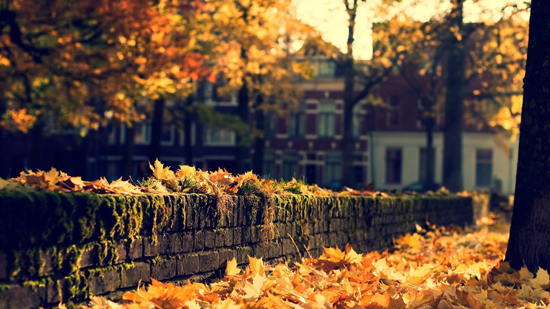 fall-wallpaper-82a